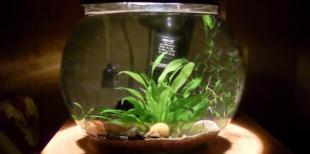 Почему мутнеет вода в аквариуме