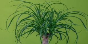 Легко ли вырастить здоровое растение