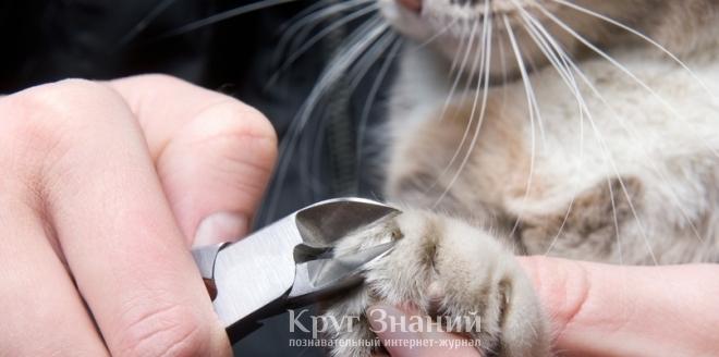 Как стричь когти котенку? - Royal Canin