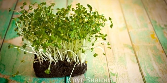 пошаговая инструкция как кресс-салат вырастить