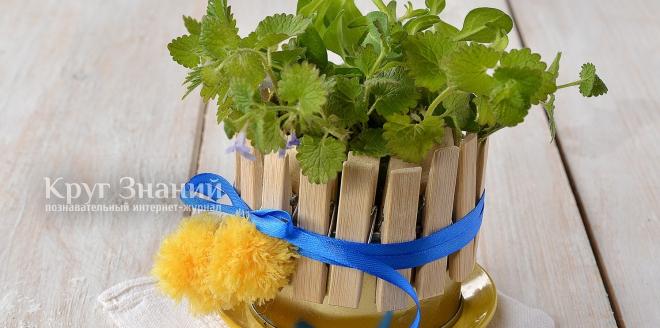 Как изготовить оригинальный горшок для цветов из консервной банки