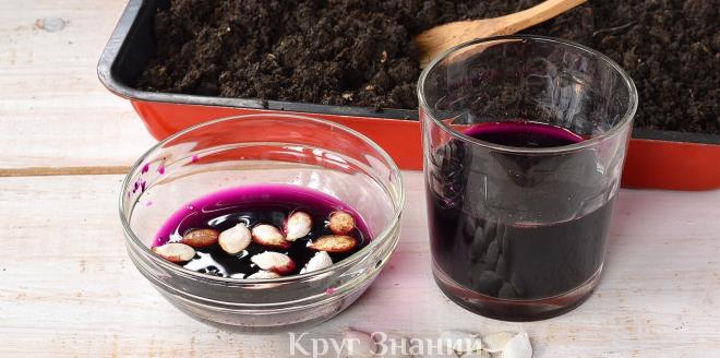 Как обработать и протравить семена марганцовкой