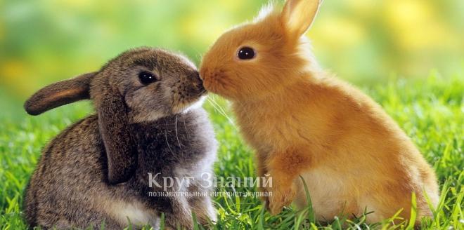 Чем кормить кроликов для быстрого набора веса