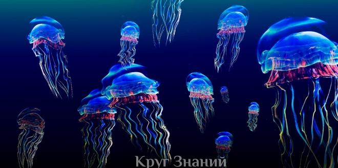 Что делать при укусе медузы