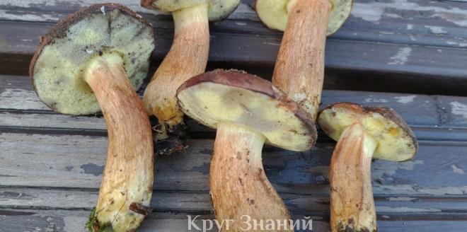 Сколько варить польский гриб